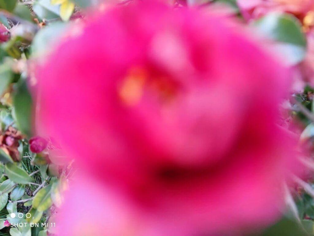пример фотографий на основную камеру Xiaomi Mi 11 - 27 МП
