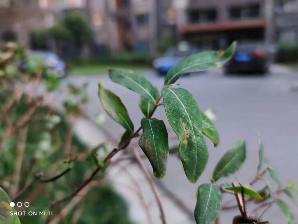 пример фотографий на основную камеру Xiaomi Mi 11 - 108 МП