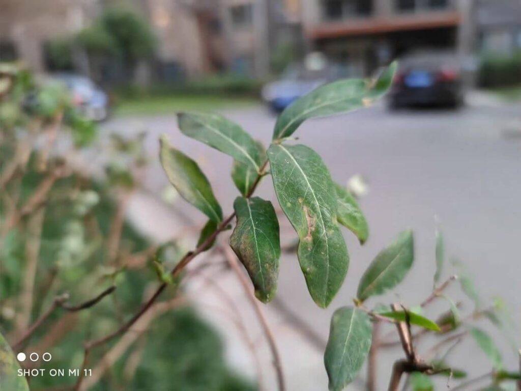 пример фотографий на основную камеру Xiaomi Mi 11 - 108 МП боке режим